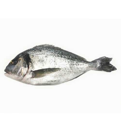 Black Bream | Direct Seafoods