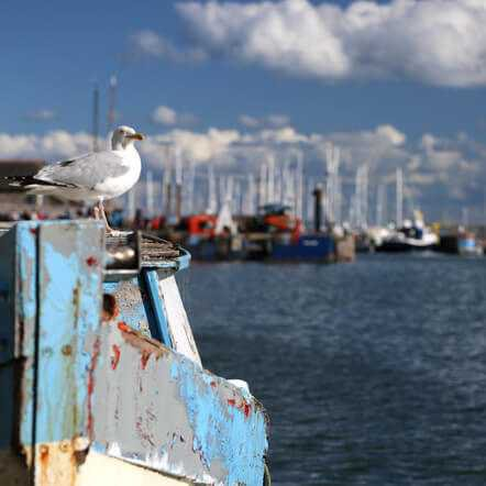 seagull on boat ledge at the docks