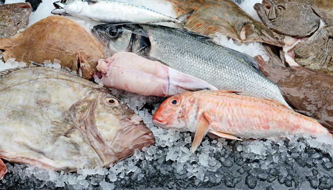 pile of fresh fishes covered with ice